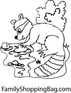 Raccoon & Stream